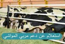 الاستعلام عن دعم المواشي | تحديث بيانات دعم المواشي في السعودية